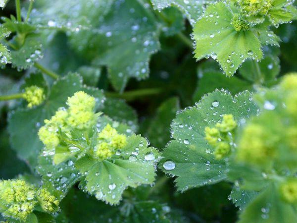 Regentropfen ruhen auf den Blättern