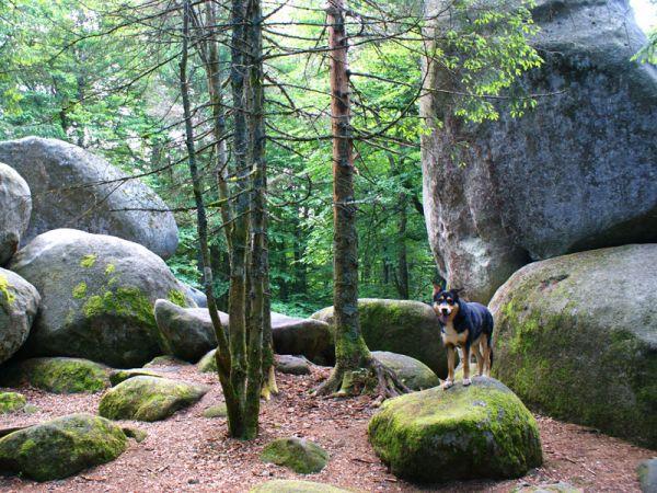Nehmen Sie sich Zeit für einen Spaziergang mit dem Hund durch den Schwarzwald
