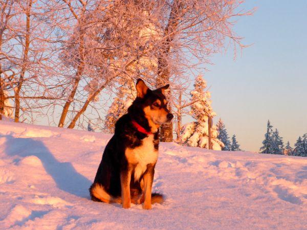 Auch Rafti beobachtet den Sonnenuntergang