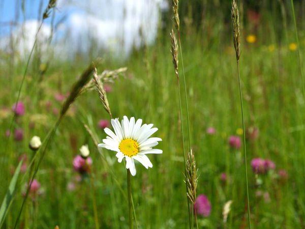 Der Frühling ist erwacht - Blumen und Gräser zeigen sich in voller Pracht