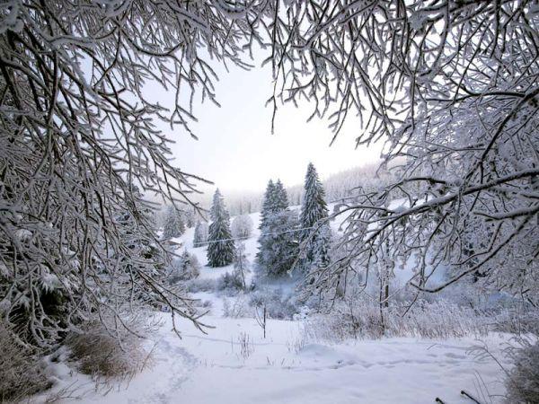 Blicks ins Winter-Wunderland