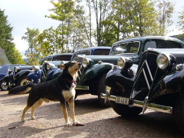 """Hund """"Rafti"""" bewacht die Oldtimer!"""