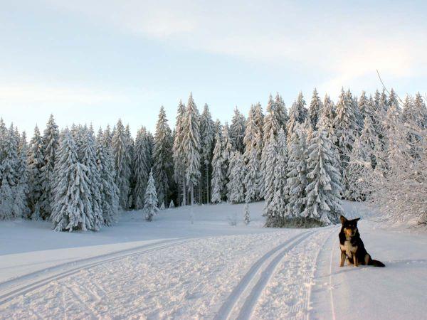 """Unser Hund """"Rafti"""" freut sich über den Schnee"""