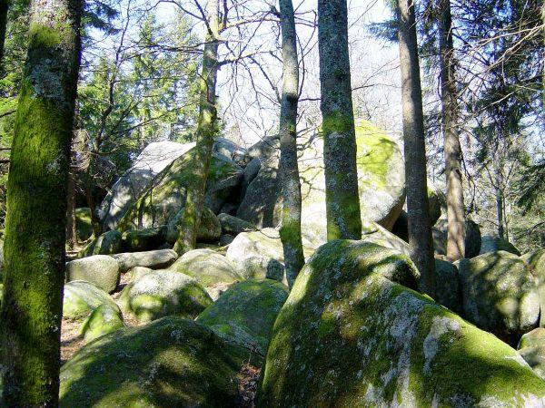 Günterfelsen - die größten bekannten Felsblöcke aus Triberger Granit