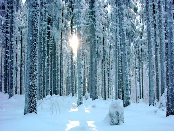Die Sonnenstrahlen funkeln im Schnee